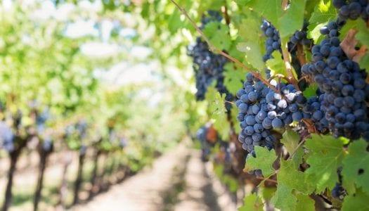 Vineyward/Wine Tours Transportation in Austin, TX